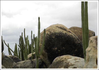 Rocks and cactus
