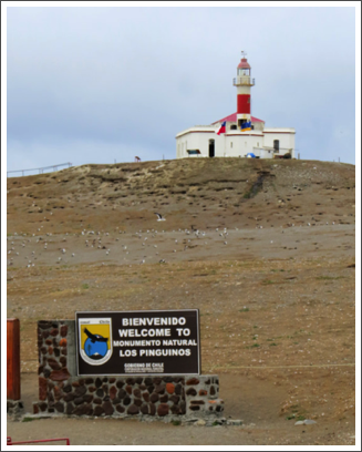 PUNTA ARENAS–a day trip to the Magdalena Island penguin reserve