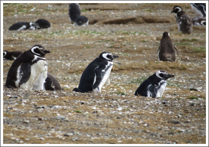 PUNTA ARENAS–Larry, Moe, and Curly watch over the beach