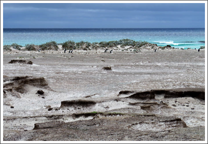 FALKLANDS–…brings us to a sandy beach and nesting site of King Penguins