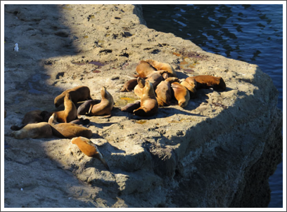 VALDES PENINSULA–…but groups of South American sea lions breed and relax on the rocky headlands