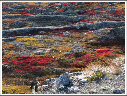 IQALUIT—the surrounding tundra is covered with low flowering plant life