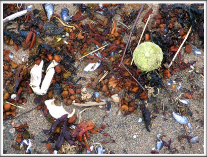 RED BAY—debris washed up on the shore