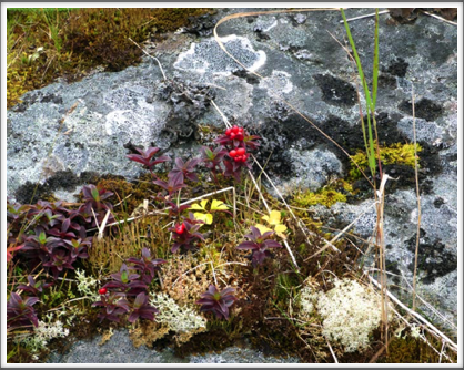 RED BAY—an assortment of colorful plant life