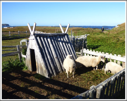 L'ANSE AUX MEADOWS—sheep shelter