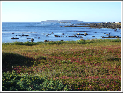 L'ANSE AUX MEADOWS—imagine Leif Eriksson looking out over the shore